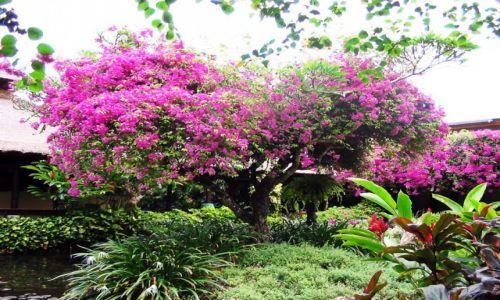 Zdjecie INDONEZJA / Bali / Sanur / Paradise