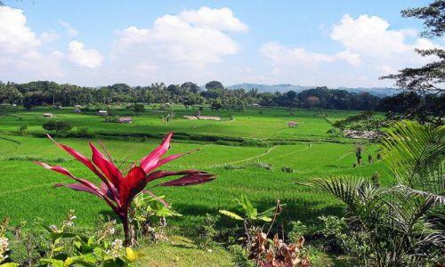 Zdjecie INDONEZJA / Bali /   / Krajobraz Bali