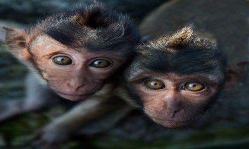 Zdjęcie INDONEZJA / Bali / Uluwatu / o dwoch takich....