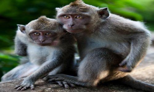INDONEZJA / Bali / Uluwatu / Co by tu zbroic?
