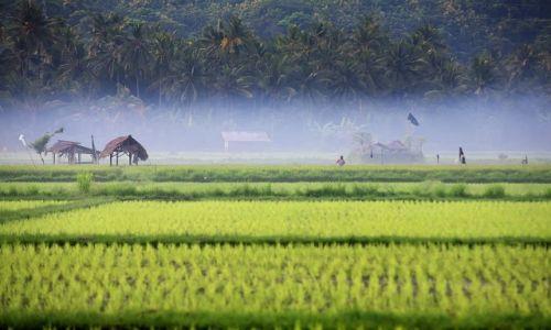 Zdjecie INDONEZJA / Bali / Indonezja / swit w ryzowych polach