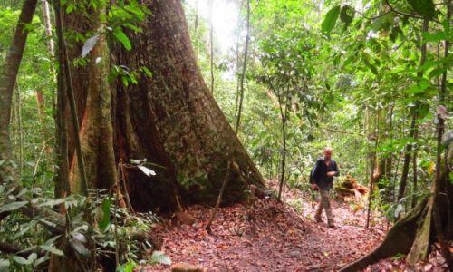 INDONEZJA / Sumatra / - / Równikowy las deszczowy