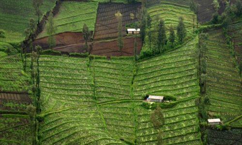 Zdjecie INDONEZJA / JAVA / JAVA / KONKURS-JAVA-2012