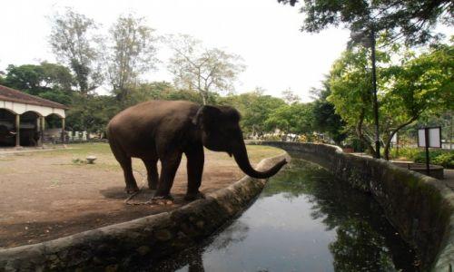 Zdjecie INDONEZJA / Yogyakarta / ...zoo / słoń