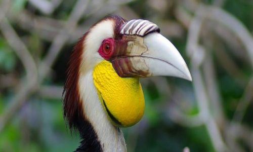 INDONEZJA / Bali / Park ptaków / Park ptaków-Bali