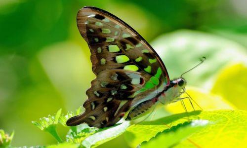 INDONEZJA / Bali / Bali / Indonezyjskie motyle 3