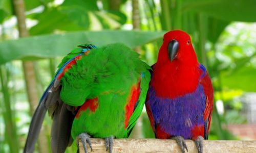 INDONEZJA / Bali / Park Ptaków i Gadów / Park Ptaków i Gadów-Bali