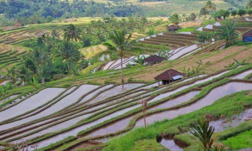 Zdjecie INDONEZJA / Bali / Jatiluwih / Tarasy ryżowe-Jatiluwih