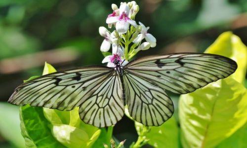 Zdjecie INDONEZJA / Bali / Bali / Indonezyjskie motyle 1