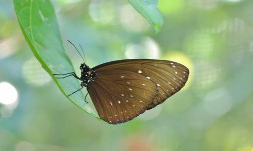 INDONEZJA / Bali / Bali / Indonezyjskie motyle 4