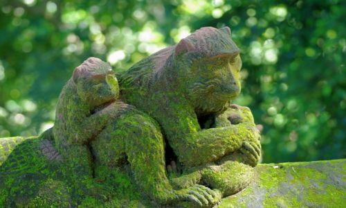INDONEZJA / Ubud / Monkey Forest / Monkey Forest-Ubud(Bali)