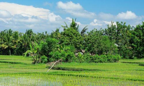 Zdjecie INDONEZJA / Bali / Ubud / Ubud-okolice Tegal Sari
