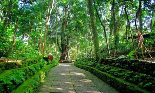 Zdjecie INDONEZJA / Bali / Ubud / Monkey Forest-Ubud(Bali)