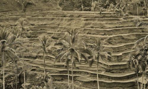 INDONEZJA / Bali / Tegalalang / Tegalalang-tarasy ryżowe