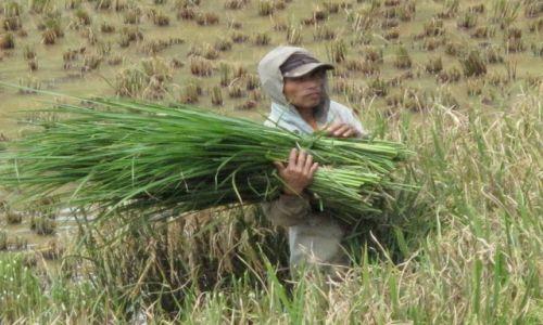 Zdjęcie INDONEZJA / Celebes / Celebes / Ciężka praca