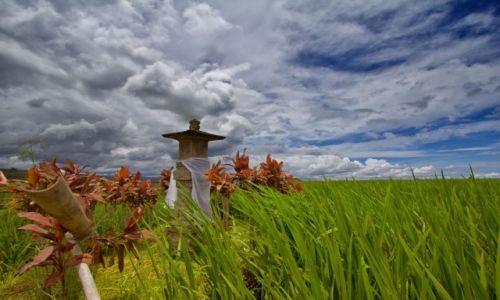 Zdjecie INDONEZJA / Bali / Pola Ryzowe / Rice Terrace