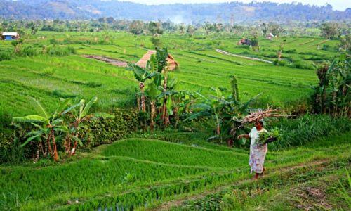 Zdjecie INDONEZJA / Amed / Bali / pole ryżowe