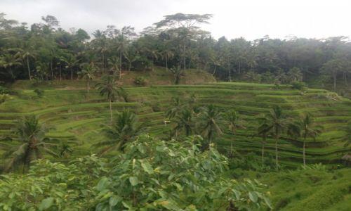 INDONEZJA / - / Bali / okolice Ubud