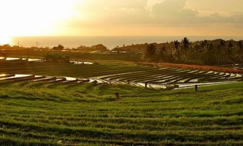 Zdjecie INDONEZJA / Bali / Bali / pola ry�owe