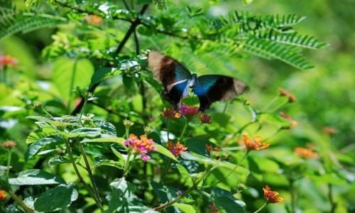 Zdjecie INDONEZJA / Bali / Bali / motylem bylem