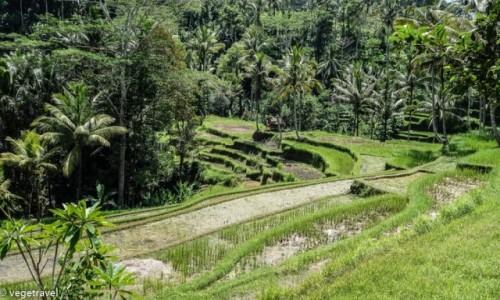 Zdjecie INDONEZJA / Bali / Bali / Tarasy ry�owe