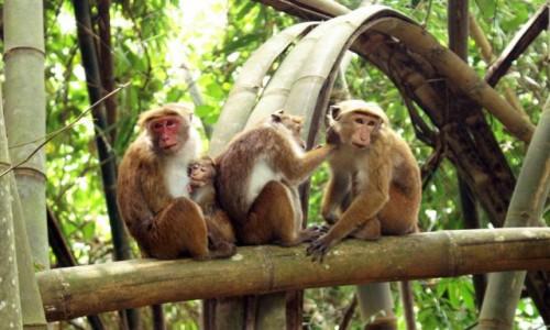 Zdjęcie INDONEZJA / Bali / Ubud / Rodzinka