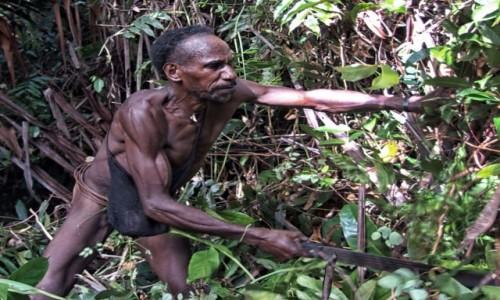 Zdjecie INDONEZJA / Papua Zachodnia / las deszczowy, dwa dni drogi od wioski Mabul / Korowaj - wyciana ścieżkę maczetą