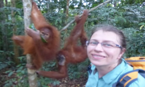 INDONEZJA / Sumatra / Bukit Lawang / Orangutany