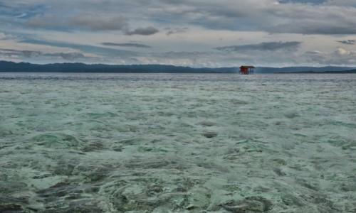 Zdjęcie INDONEZJA / Raja Ampat / pobliże wyspy Gam / Zakręcona