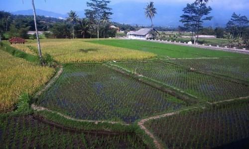 Zdjęcie INDONEZJA / Jawa / trasa Bandung Yogyakarta / jawajskie pejzaże