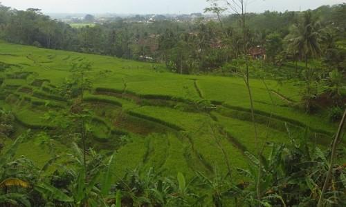 Zdjecie INDONEZJA / Jawa / trasa Bandung Yogyakarta / jawajskie pejzaże
