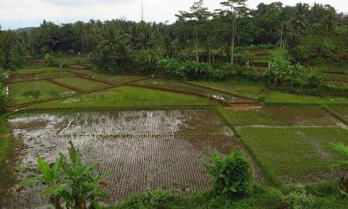INDONEZJA / Jawa / trasa Bandung Yogyakarta / jawajskie pejzaże