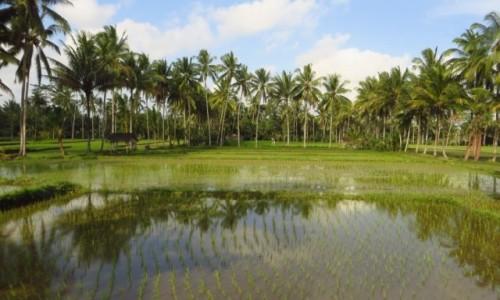 Zdjęcie INDONEZJA / Bali / gdzieś na wyspie / krajobrazy Bali