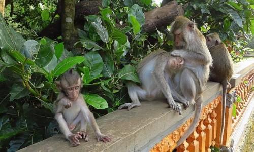 Zdjęcie INDONEZJA / Bali / gdzieś na wyspie / Święty Las Małp