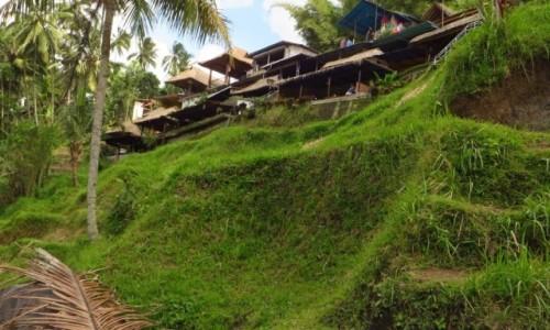 Zdjecie INDONEZJA / Bali / Ubud / pola ryżowe