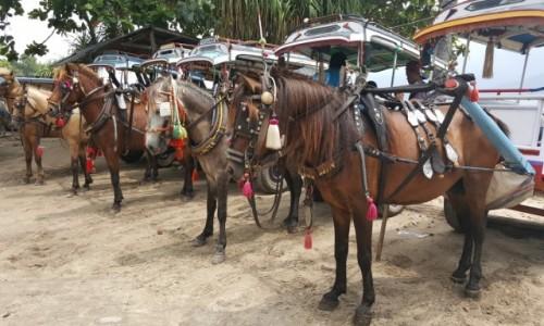 Zdjecie INDONEZJA / - / Wyspa Gili Air / Taxi Indonezja