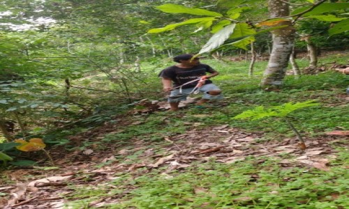 Zdjecie INDONEZJA / Sumatra / Bukit lawang / Ziemia na Sumatrze