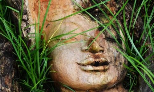 Zdjecie INDONEZJA / Gianyar / Ubud / W trawie
