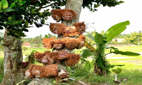 Zdjecie INDONEZJA / Bali / Ubud / Kokosy z Bali