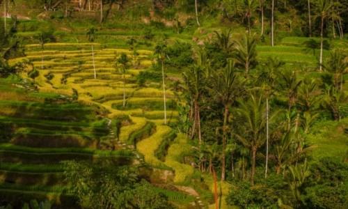 Zdjęcie INDONEZJA / Bali / Tegalalang Rice Terrace / Tegalalang