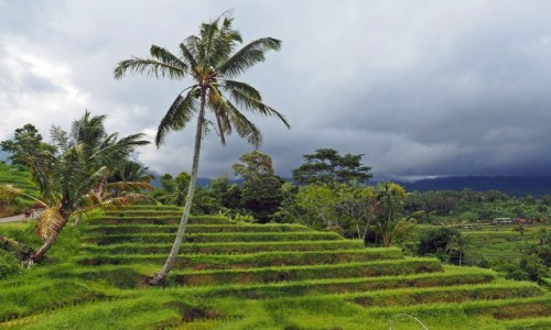 INDONEZJA / Bali / Jatiluwih / Pola ryżowe (II)