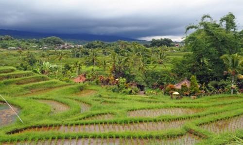 INDONEZJA / Bali / Jatiluwih / Pola ryżowe (III)