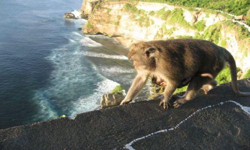Zdjecie INDONEZJA / Sumba / Sumba / Małpka