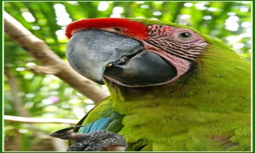Zdjecie INDONEZJA / Wyspa Flores / Wyspa Flores / w świecie ptaków