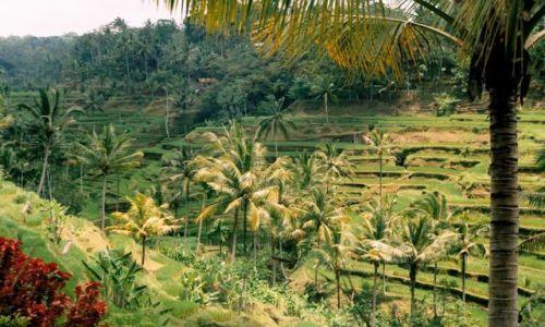 Zdjecie INDONEZJA / płn Bali / tarasy ryżowe / tarasy