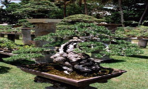 Zdjecie INDONEZJA / Bali / sanur / ile ma lat