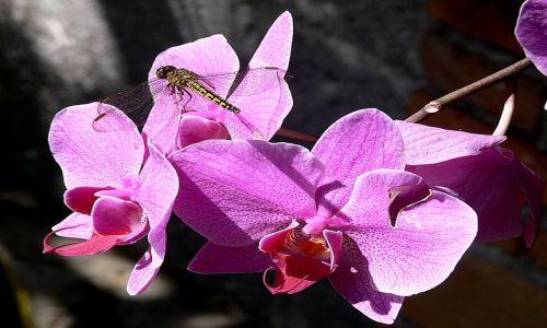 Zdjecie INDONEZJA / Wyspa Bali / ogród storczyków / Kwiatek też z PTASZKIEM dla ...Paulingi