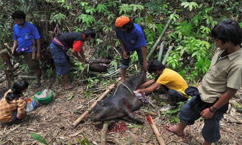Zdjecie INDONEZJA / Sulawesi / Tana Toraja / Okoliczne zarośla były pełne zarzynanych zwierząt