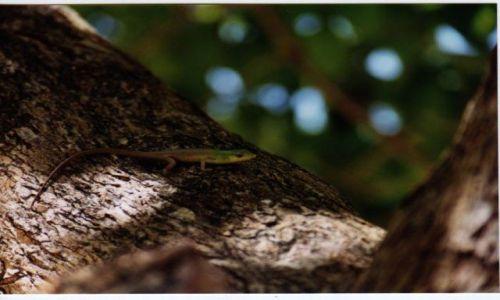 Zdjęcie INDONEZJA /  West Papua / Jaja Pura / Jaszczurka