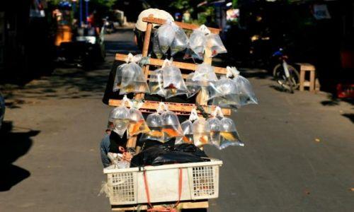 Zdjecie INDONEZJA / jawa / jakarta / sprzedawca rybek
